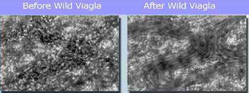 Before and after Wild Viagla